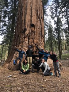 OBCA crew with giant redwood